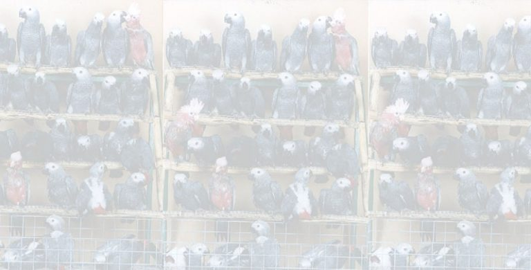 cropped-Roodepoort-Rocci-Chamber-Of-Commerce-Industry-Africangrey Breeders and Exporters Cover